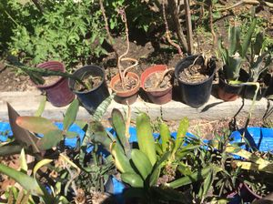 Assorted plants and Succulent s for Sale in Cerritos, CA