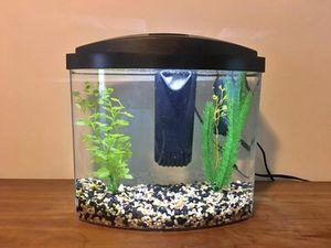 2.5 Gallon Aquarium for Sale in Methuen, MA