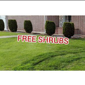 10 Free Shrubs Arborvitae for Sale in Carteret, NJ