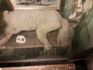 Mummified chupacabra for Sale in Fremont, CA