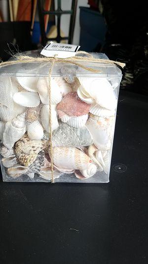 Decorative Shells for Sale in Tacoma, WA