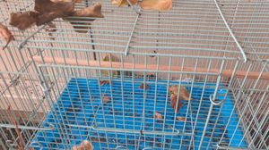 dirty bird cage for Sale in Campbell, CA