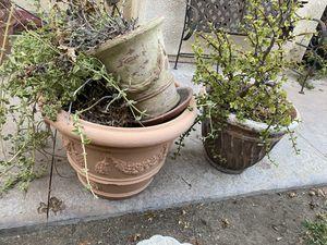 Free Pots for Sale in Corona, CA