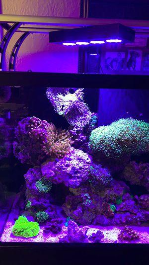 90 gallon star fire glass aquarium for Sale in N REDNGTN BCH, FL