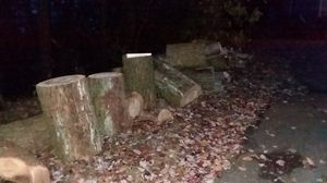 Free fire wood for Sale in Selinsgrove, PA
