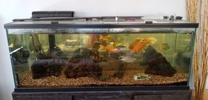 Aquarium 100 Gallons for Sale in Cypress, CA