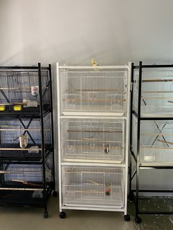 Breaded Bird Stack Cages $125 Fir 3 Stack Cages And $95 For The 2 Stack Cages Call {contact info removed} for Sale in Fort Worth,  TX