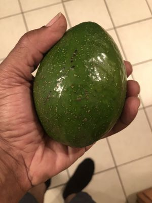 Avacados .75 each beautiful. for Sale in Tampa, FL