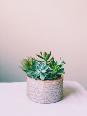 Succulents in Planter for Sale in Tampa, FL