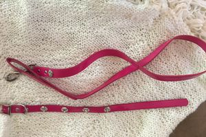 Dog leash and collar combo with crowns 👑 - like new for Sale in Lynn, MA