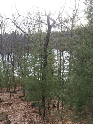 Log cabin house on privite lake for Sale in Irons, MI