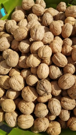 Large jumbo sized Chandler Walnuts for Sale in Fresno, CA