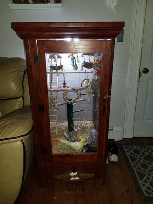 Birds with handmade cage for Sale in South Attleboro, MA