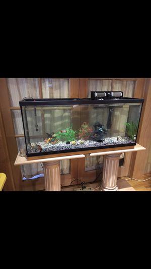 Fish tank 50 gallon for Sale in Los Angeles, CA