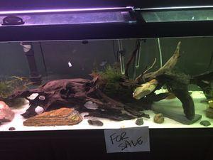 125, 55, 30 gallon fish tanks. for Sale in Canton, GA