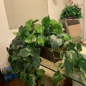Fake Plant 2 for Sale in Las Vegas, NV