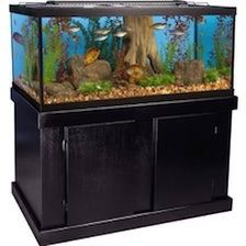 60 Gallon Fish Tank for Sale in Bowie, MD