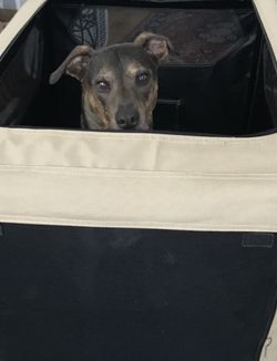 Soft Collapsible Dog Crate - Amazon Basics for Sale in Brooklyn,  NY