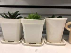 office plants $10 for 3 for Sale in San Francisco, CA