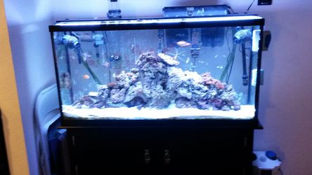 60gal salt water tank setup for Sale in East Wenatchee,  WA