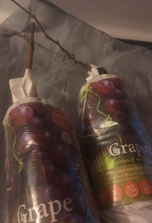 Purple Seedless grapes/ready for planting for Sale in Woodbridge, CA