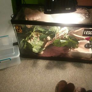Snake and accessories for Sale in Clarksville, TN