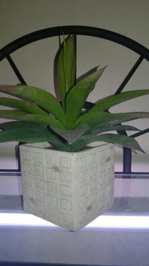 Fake plant for Sale in Groveport, OH