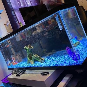 55 Gallon Fish Tank for Sale in Richmond, CA