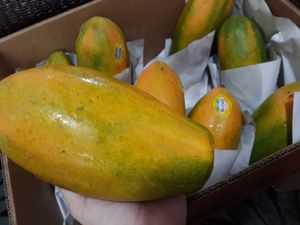 Sabrosas papayas dulces. for Sale in Homestead, FL