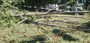 Firewood oak for Sale in Farmville, VA