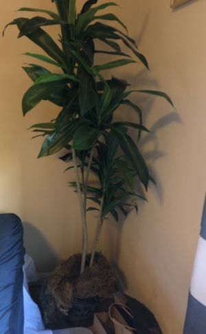 Fake Palm Plant for Sale in Brentwood, TN