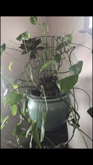 Beautiful indoor Plants for Sale in Mentor, OH