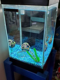15 Gallon Fish Tank With Stand for Sale in Hillsboro,  OR