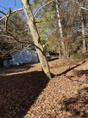 Tree cut for Sale in Lawrenceville, GA