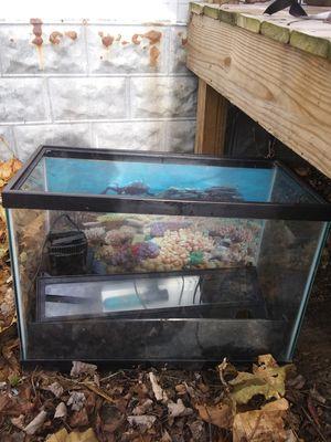 40 gallon fish tank for Sale in Greensboro, MD