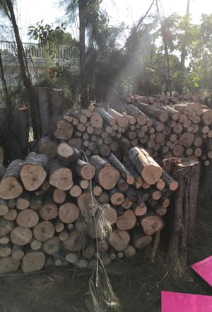 Free Wood ( A lot of it) for Sale in North Port, FL