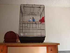Cage with everything for Sale in Springfield, MA