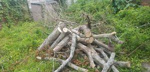 Free Wood for Sale in Savannah, GA