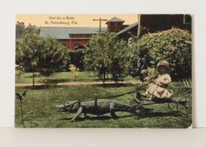 Antique 1920s Posted St. Pete, Florida Girl in Alligator Cart Postcard for Sale in St. Petersburg, FL