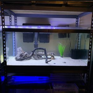 40 gallons Breeder Fish Tank Aquarium for Sale in Burke, VA