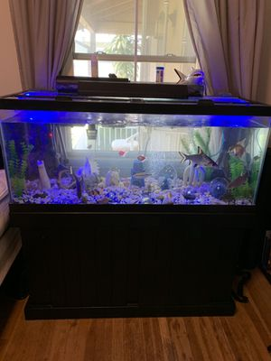 Gorgeous dream 80 gallon fish tank / aquarium. Fully loaded. Filters, heaters, fish, bubblers. EVERYTHING!!! for Sale in Fullerton, CA