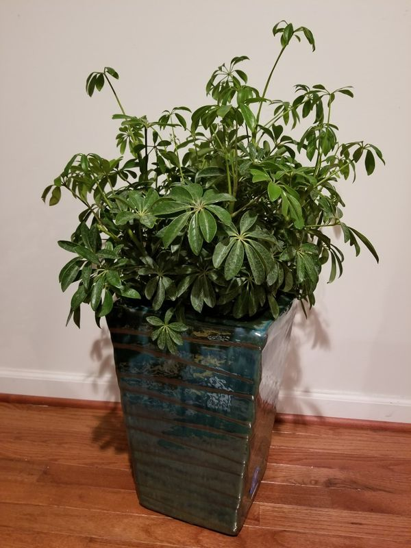 *NEW* Large Indoor/Outdoor Planter w/Gorgeous Plant