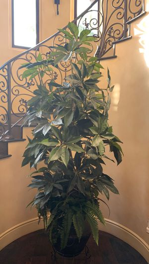 False indoor plant for Sale in Los Angeles, CA