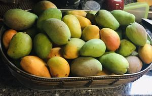 Organic mangoes for Sale in Costa Mesa, CA