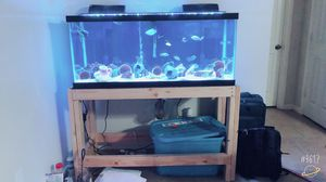 75 gallon fish tank with DIY stand for Sale in Houston, TX