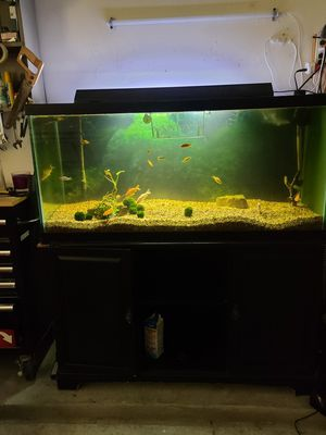 75 gallon with stand for Sale in Tomball, TX
