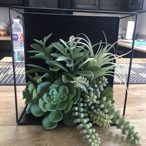 Hanging Succulent for Sale in Gilbert, AZ