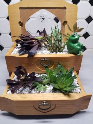 """"""" Collection of succulent plants """" for Sale in Denver, CO"""