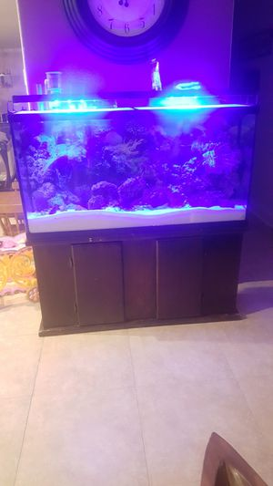 Aquarium for Sale in Gibsonton, FL