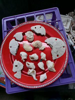 Gratis pedasos De Conchas De Mar (free) for Sale in Temecula, CA